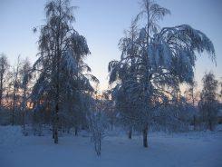 Talvinen ja luminen metsämaisema.